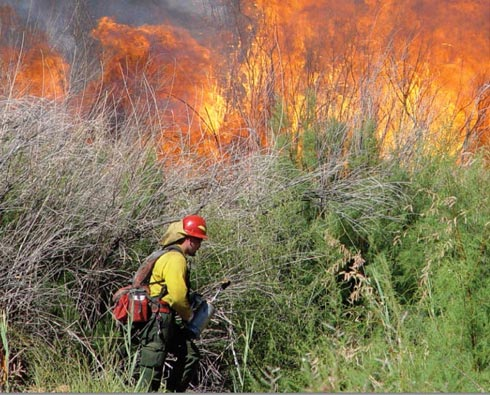 Fire Safe San MAteo Invasive Species and Wildfire